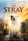 The Stray - VOD